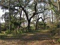 148 Spring Island Drive thumbnail image 4