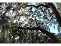319 Spring Island Drive thumbnail image 10