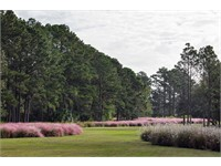 Pine Island thumbnail image 5