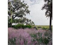 Pine Island thumbnail image 27