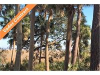 4 Live Oak Forest thumbnail image 1